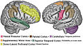 Temporal expectations in the brain.jpg