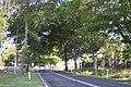 Tenterfield Cowper Street.JPG