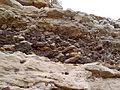 Thalassinoides Book Cliffs.JPG