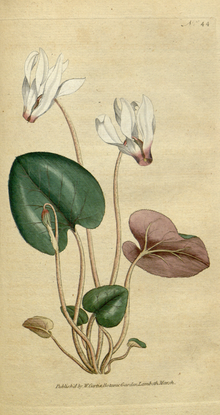 The Botanical Magazine, Plate 44 (Volume 2, 1788).png