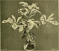 The Gardeners' chronicle - a weekly illustrated journal of horticulture and allied subjects (1913) (14786215703).jpg