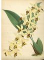 The Orchid Album-01-0089-0029.png