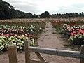 The Rose Fields, Woodborough - geograph.org.uk - 34659.jpg