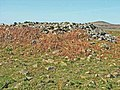 The White Cairn on the Wigtownshire Moors - geograph.org.uk - 163179.jpg