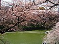 "The famous view point of cherry blossoms ""Chidori-ga-fuchi"" - panoramio - MAKIKO OMOKAWA.jpg"