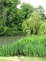 The village pond - geograph.org.uk - 820343.jpg