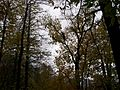 There's a bear in the tree - panoramio.jpg