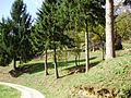 Tomašnica - Zaselak Pavlić Brdo - panoramio (1).jpg