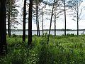 Tomsky District, Tomsk Oblast, Russia - panoramio (193).jpg