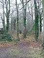 Track through the woods - geograph.org.uk - 644175.jpg
