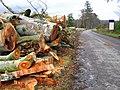 Tree felling at Drum Castle - geograph.org.uk - 1021270.jpg