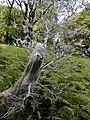 Tree stump - geograph.org.uk - 1512698.jpg