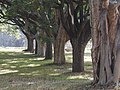 Trees 23.jpg