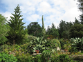 Tresco Abbey Garden - beautiful plants.png