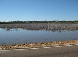 Tunica County MS 01 Flooded Cotton Field.jpg
