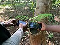 Two men taking a picture of a tree cavity filled with water - 01.jpg