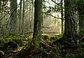 Tyresta naturreservat, 1 april 2017.jpg