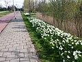 Uithoorn, Netherlands - panoramio (24).jpg