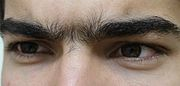 Unibrow Close Up.jpg