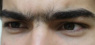 Unibrow - A close up of the human unibrow.  Not all unibrows are similar, the unibrow pictured above also has hair between the eyes.