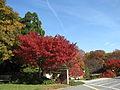 United States National Arboretum 8.JPG