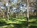Vabaduse parkmets 2.jpg