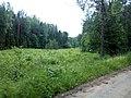 Valdaysky District, Novgorod Oblast, Russia - panoramio (431).jpg