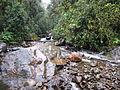 Valle de Cocora river.JPG