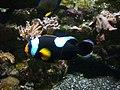 Vannes - aquarium (17).jpg