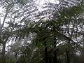 Vegetación Cerro de Escamela, Veracruz.jpg