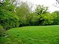 Vegetation by the Crofft-hir Brook - geograph.org.uk - 1346353.jpg