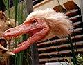 Velociraptor head.jpg