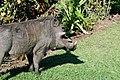 Victoria Falls 2012 05 24 1577 (7421897794).jpg