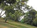 View of Woodlands Town Park East from Block 127, Marsiling Rise, Singapore.jpg