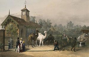 A painting of the London Zoo in 1835.