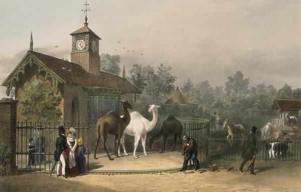 View of the Zoological Gardens1835