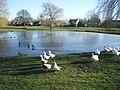 Village Pond at Nun Monkton - geograph.org.uk - 434353.jpg