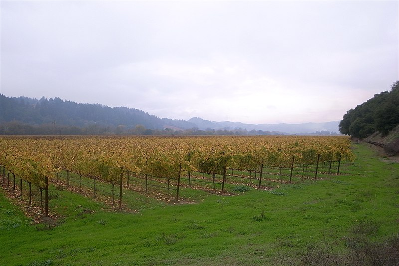 File:Vineyards in Dry Creek Valley.jpg