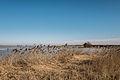 Vogelkijkhut bij de Ezumakeeg 2.jpg