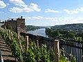Vyšehrad vineyards - panoramio.jpg