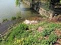 Vyžlovský rybník (002).jpg