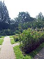 Warsaw Uniwersity Botanical Garden rosarium.jpg