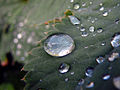 Waterdrop22.jpg