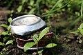 Weggeworfene Cola-Dose und Natur vereint.jpg