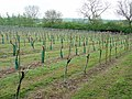 Welland Valley Vineyard, East Farndon - geograph.org.uk - 289771.jpg