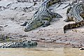 Western Serengeti 2012 06 02 4063 (7557753338) (2).jpg