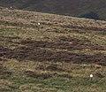 White boundary stones - geograph.org.uk - 253666.jpg