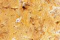 Wikicheese - Fourme de Montbrison - 20151024 - 008.jpg