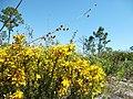 Wild Flowers - panoramio (7).jpg