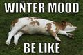 Winter mood-MEME 20200213.png